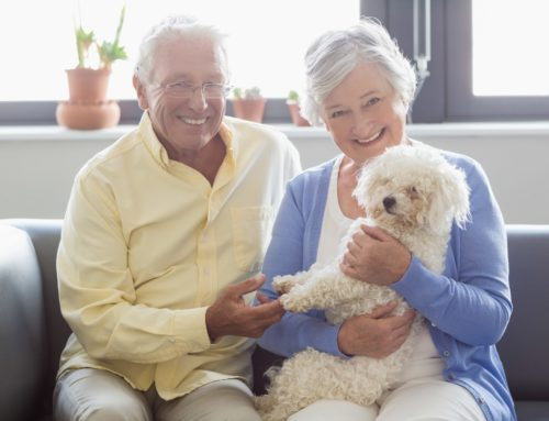 The positives of pets: Why pets are so good for seniors